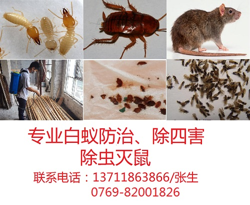 塘厦白蚁防治