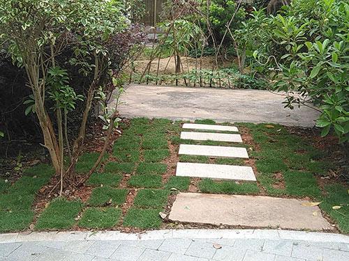 苗木草坪工程