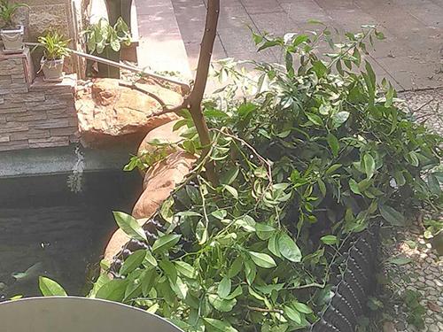綠化魚池工程