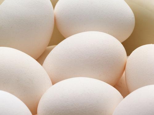 东莞鸡蛋批发