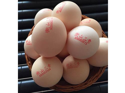 衡山三黃雞蛋供應