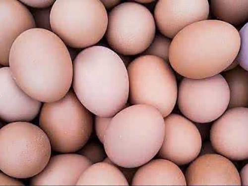 东莞土鸡蛋