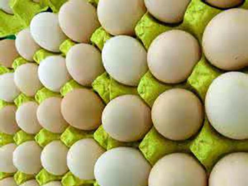 東莞鮮雞蛋