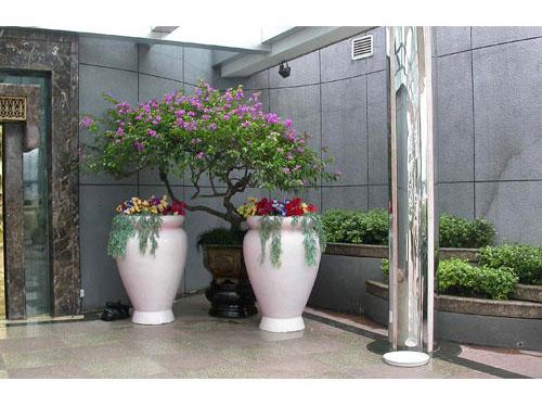 植物租摆公司-东莞市好运植物园-企讯网