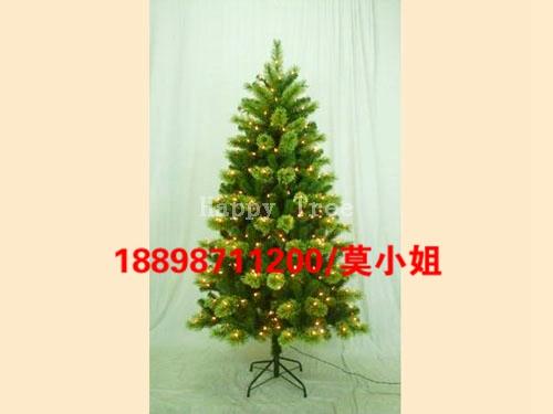 6尺松針樹