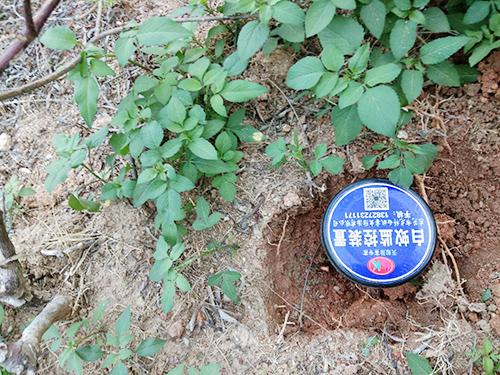 白蟻預防滅治