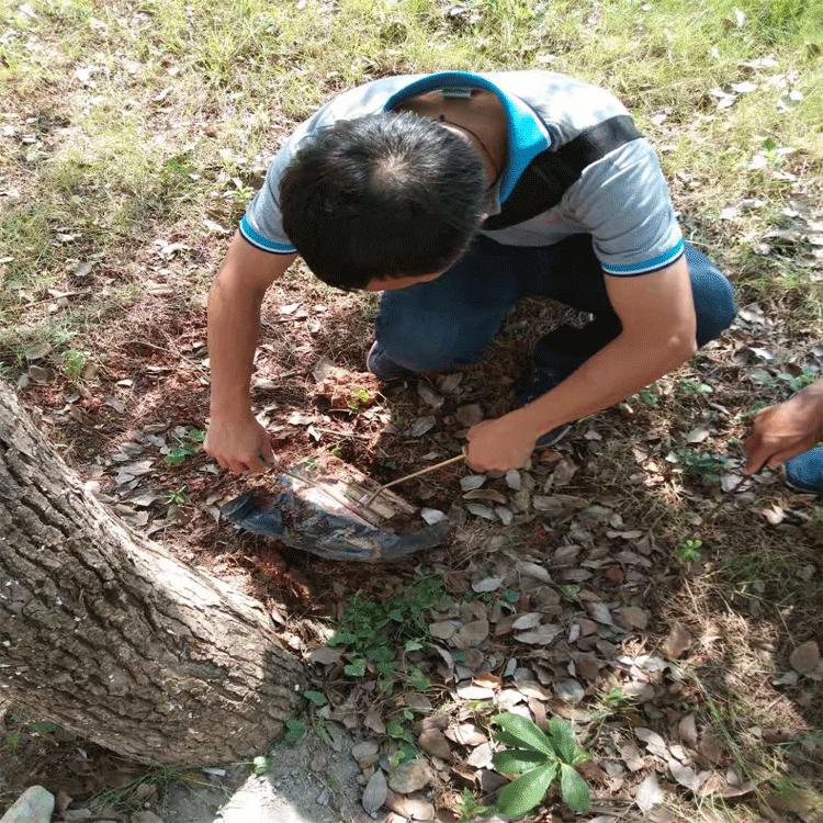 环保灭白蚁防治服务_龙科白蚁_街道_房屋_附近的_办公室_社区