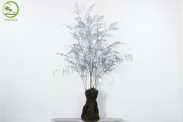 仿真銀蕨樹盆栽