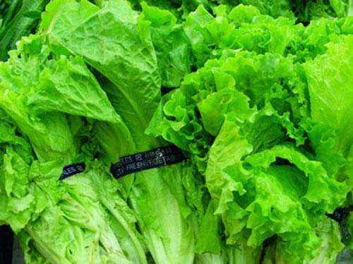 广西工厂蔬菜配送供应 山农送菜
