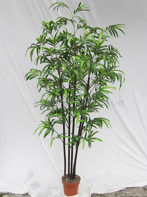 紫竹盆栽图片大全