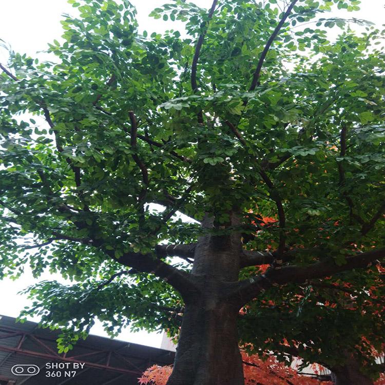内蒙古仿真树定制_恒翔_室外_桫椤树_棕榈_大型_罗汉松树