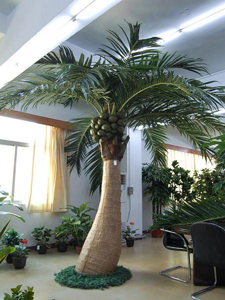 4米大肚椰子树