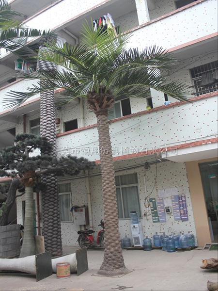 墨西哥仿真海藻樹