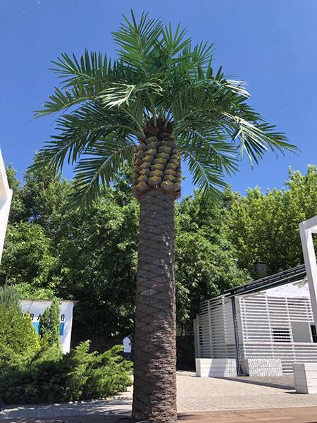 6米加拿利海藻树(塑料壳)