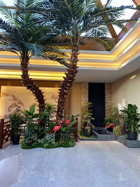 5米高彎桿棕櫚樹