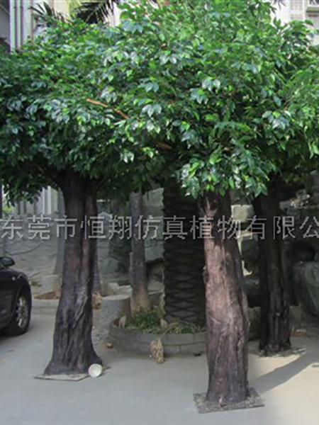 HX8042-秘魯5米仿真榕樹