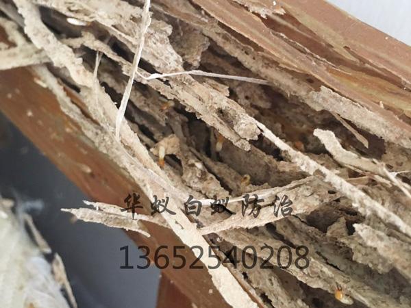 塘厦专业白蚁防治