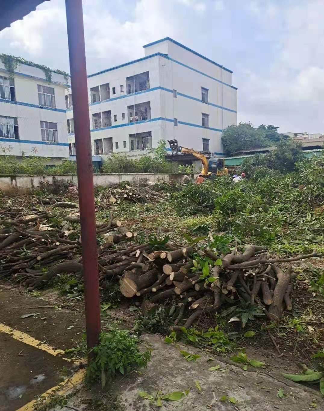 绿化垃圾清理|绿化养护|园林养护
