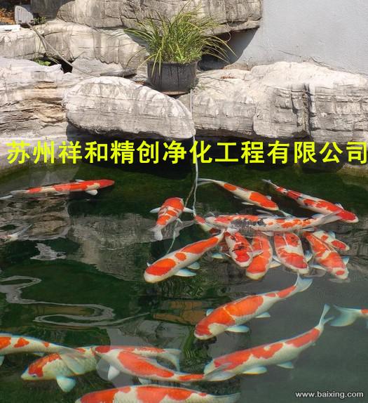 苏州专业的鱼池水处理公司,当属祥和精创净化工程_鱼池水处理鱼池水发绿青苔供应