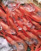 微波對蝦烘干設備