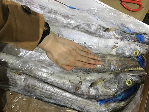 南美带鱼销售