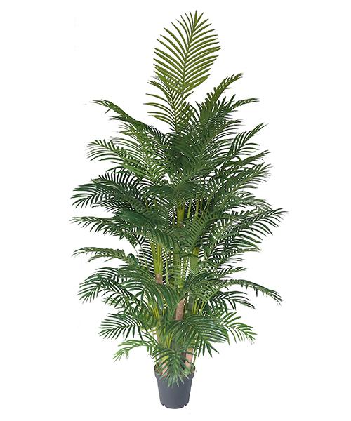 仿真葵树 2.2米夏威夷葵Y8388-66-13PS