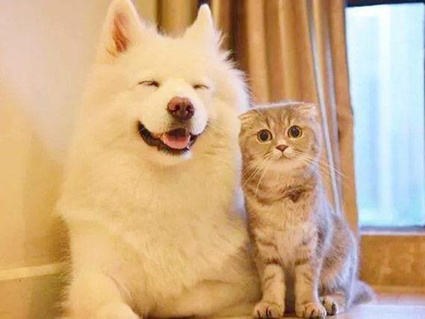 宠物待验(点击进入详情)