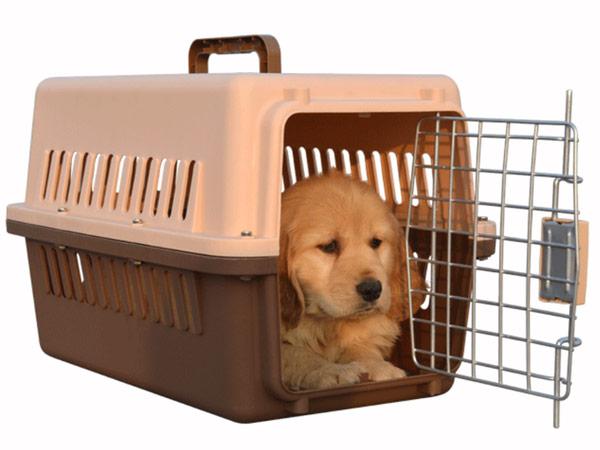 宠物托运服务(点击进入详情)