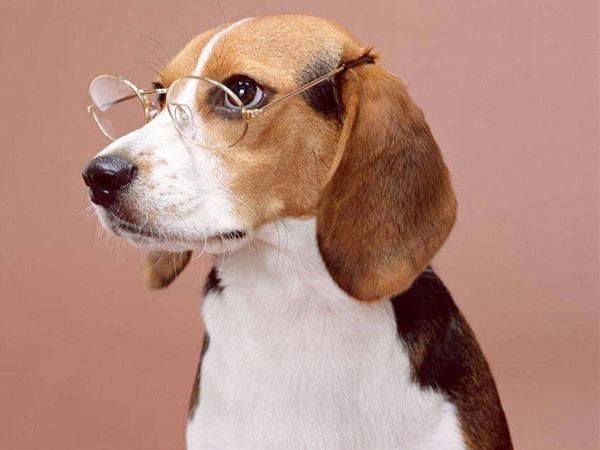 宠物运输保险(点击进入详情)