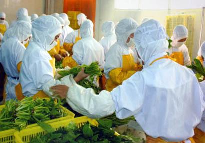專業蔬菜加工