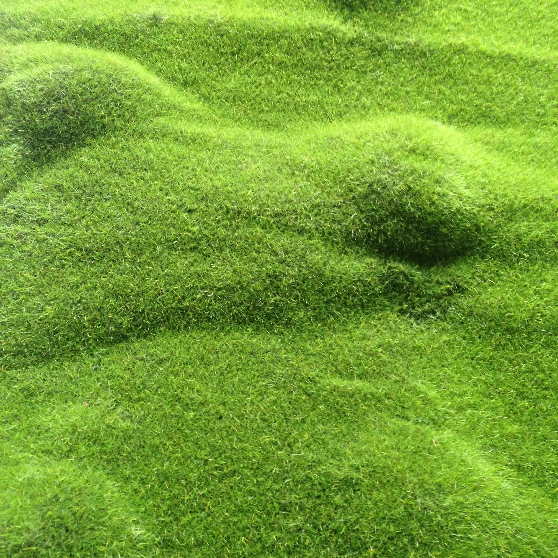 仿真植物草皮 微景观 永生花 微景观绿色装饰 多肉植物 相框盆景