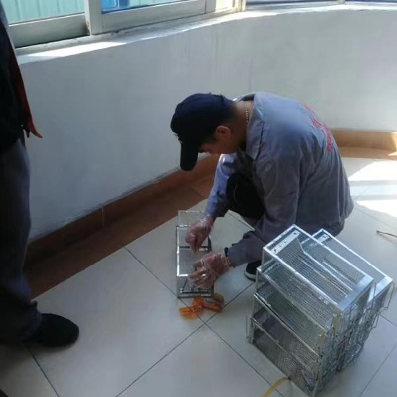 鳳崗宿舍滅鼠_百輝有害生物防治_服務標準是什么樣的_品質控制介紹