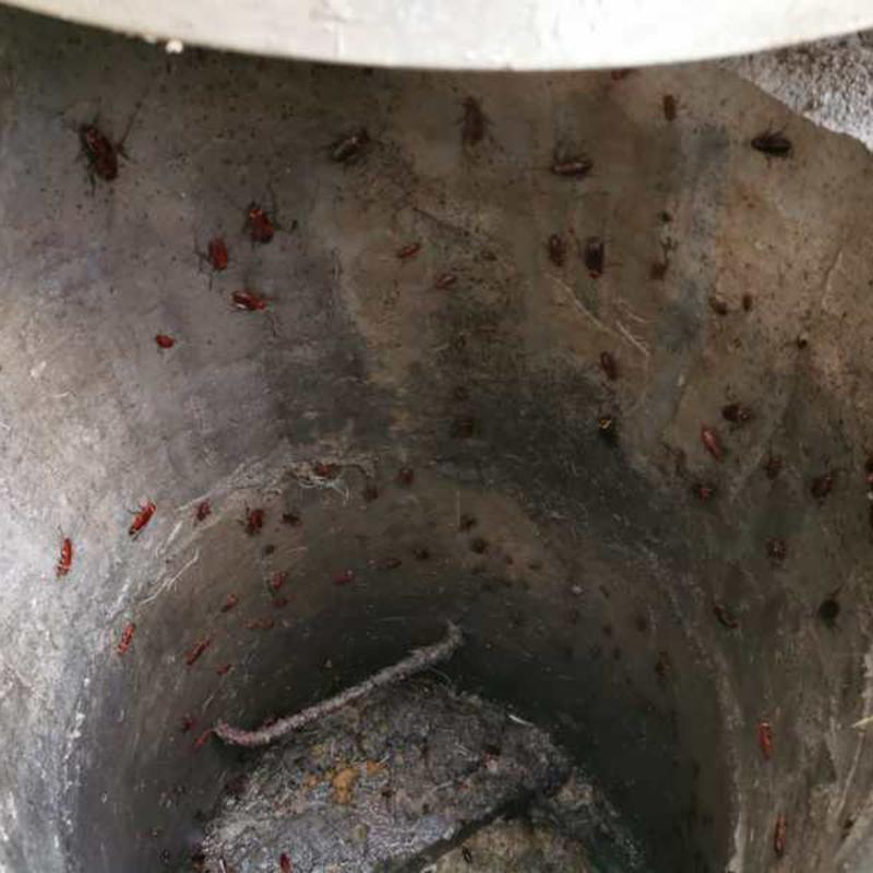 社區_銀行蟑螂防治哪家價格低_百輝有害生物防治