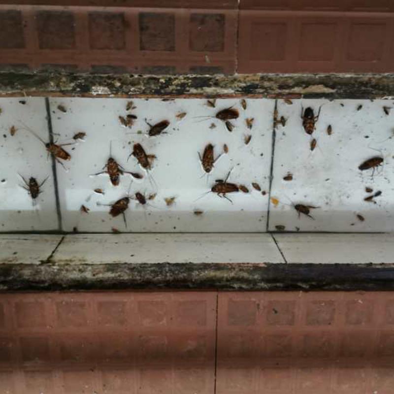 小區_辦公室蟑螂防治需要多少錢_百輝有害生物防治