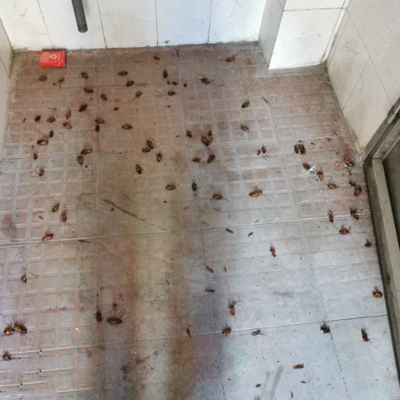 麻涌蟑螂防治需要多少錢_百輝有害生物防治_宿舍_酒店_辦公室