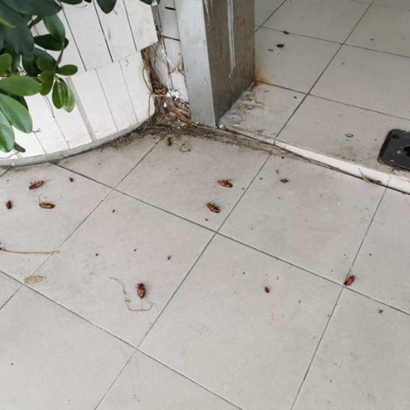 南城蟑螂防治治理公司_百輝有害生物防治_寫字樓_附近的_酒店
