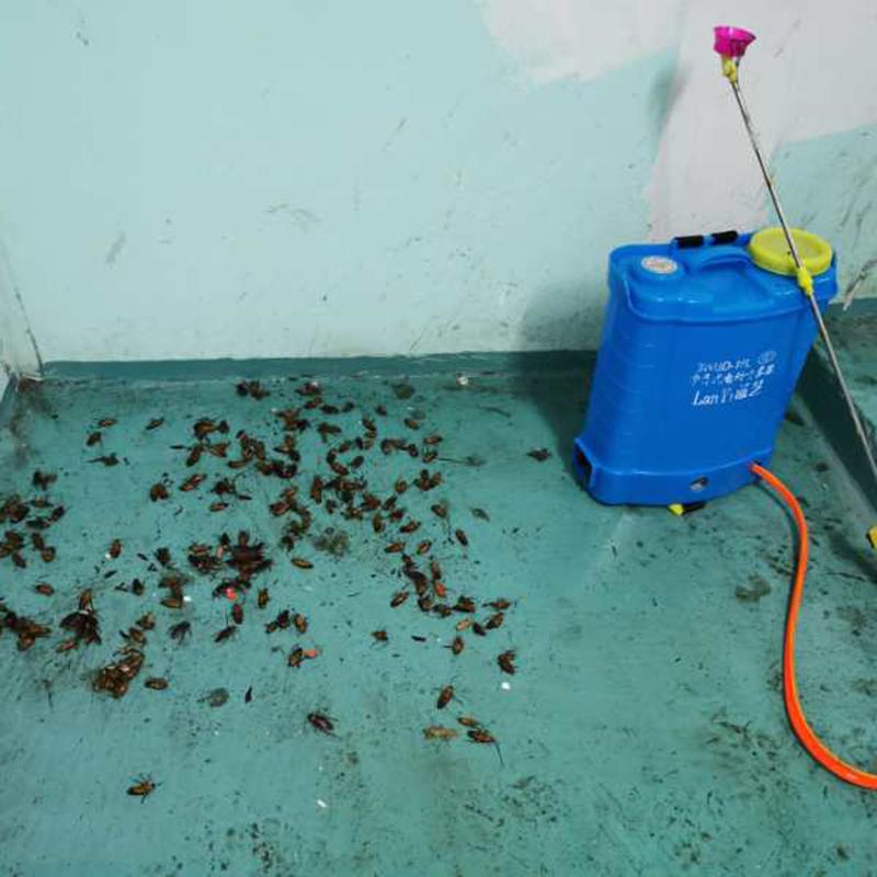横沥蟑螂防治收费标准_百辉有害生物防治_宿舍_工厂_社区_专业