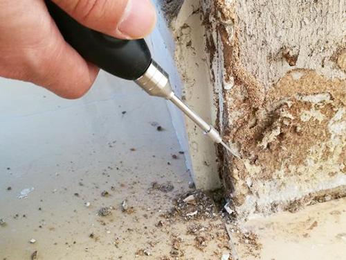 家庭白蟻防治