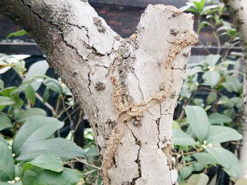 小區白蟻防治