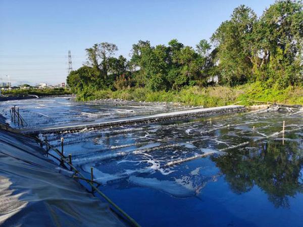 揭西鳳江鎮河涌黑臭水體微生物 修復方案