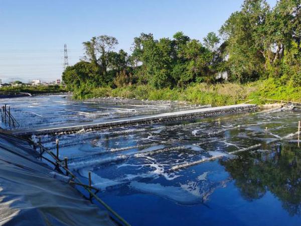 揭西鳳江鎮河涌黑臭水體微生物