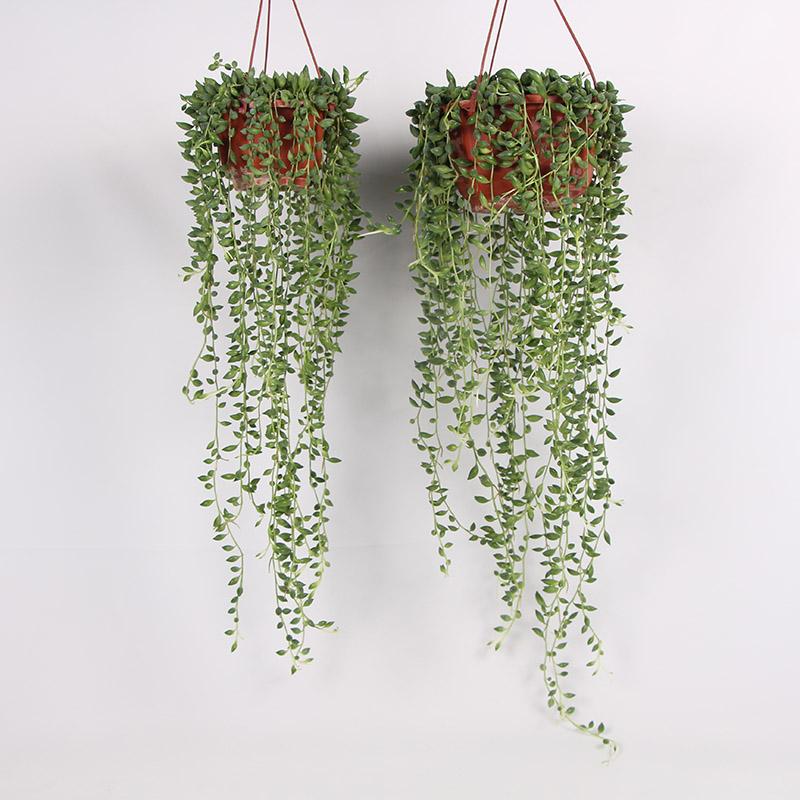 西安客廳吊盆盆栽_紅林園藝_批發哪里有_價格有吸引力