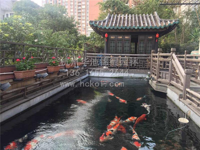 杭州别墅庭院锦鲤鱼池过滤系统设计建造 杭州鱼池设计