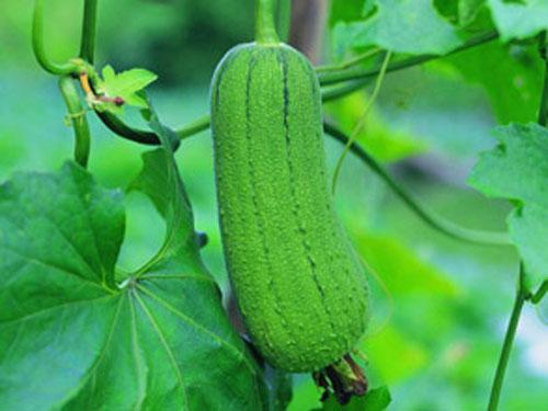惠东配送蔬菜