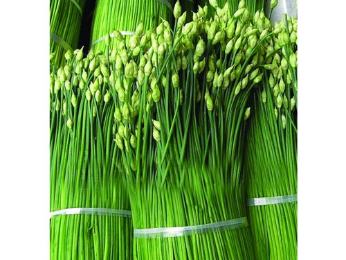 惠东蔬菜配送
