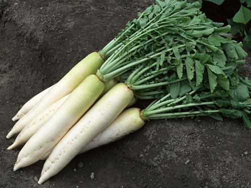 萝卜蔬菜配送