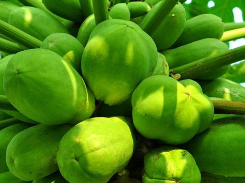 木瓜蔬菜配送