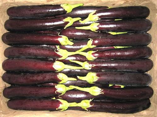 茄子蔬菜配送
