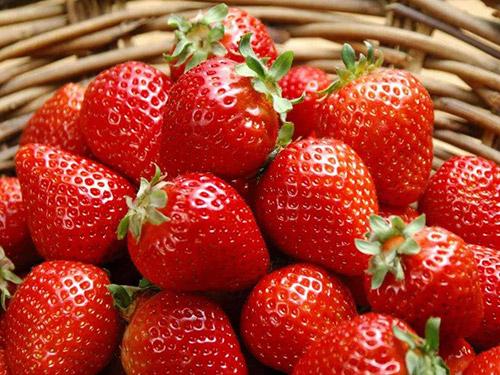 塘厦草莓配送
