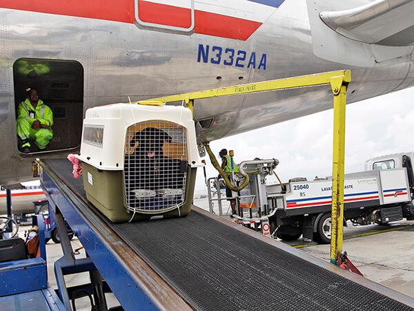 寵物航空托運